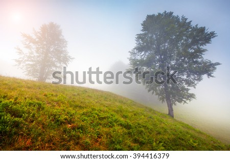 Misty morning scene in the mountain forest. Colorful sunrise in foggy Carpathian valley. Summer landscape in Ukraine, Europe. - stock photo
