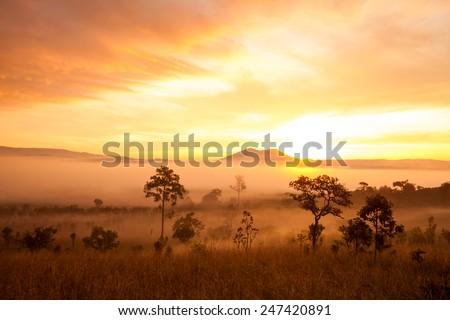 misty morning sunrise in mountain at Thung Salang Luang National Park Phetchabun,Thailand - stock photo