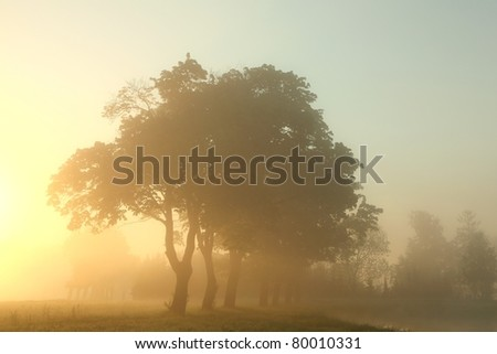 Misty morning with maple trees in the foreground. - stock photo