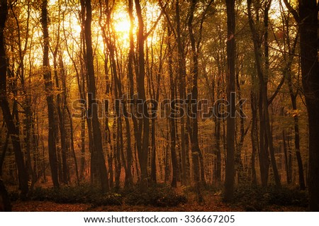 Misty mountain forest in the sunset. Vintage style photo - stock photo