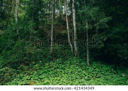 Misty Mountain green Forest  landscape. Nature, trees, Travel - stock photo