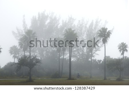 Misty palms and pines by a Florida beach, with small bicyclist traveling through on a path - stock photo