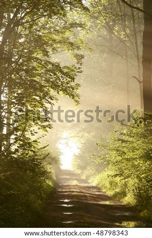 Misty path leading through the spring woods surrounded by lush green maple leaves. - stock photo