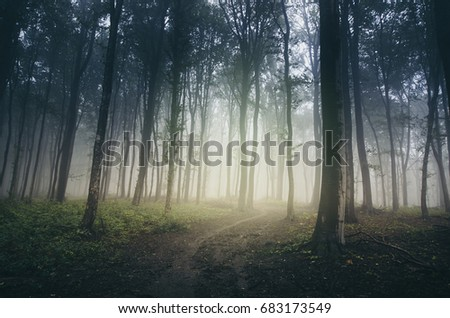 misty path through dark mysterious forest