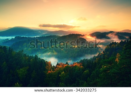 Misty pine forest. The mountain slope in autumn nature reserve - stock photo