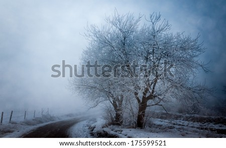 Misty roadside trees - stock photo