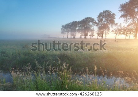 misty sheep pasture at sunrise in summer - stock photo