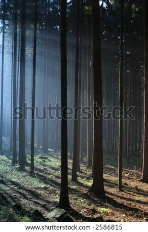 Misty sunrise in the forest,early autumn - stock photo