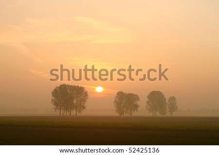 Misty sunrise over the trees in the field. Photo taken in May. - stock photo