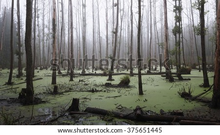 misty swamp in the forest - stock photo