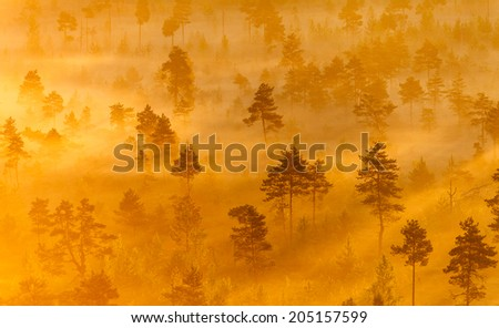 Misty trees growing in the Torronsuo Swamp in Finland on an early morning. - stock photo