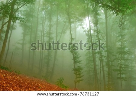 misty tropical forest in a fog - stock photo