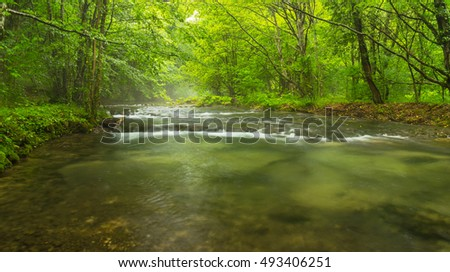 Misty wild river in the forest in spring