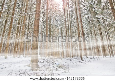 misty winter forest - stock photo