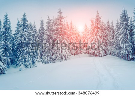 Misty winter morning in the foggy mountain forest. Instagram toning. - stock photo
