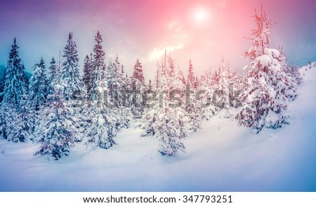 Misty winter scene in the snowy mountain forest. Instagram toning. - stock photo