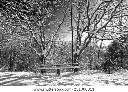 Misty winter woods at dawn - stock photo