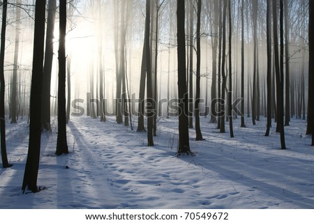 Misty winter woods at dawn. Photo taken in December. - stock photo