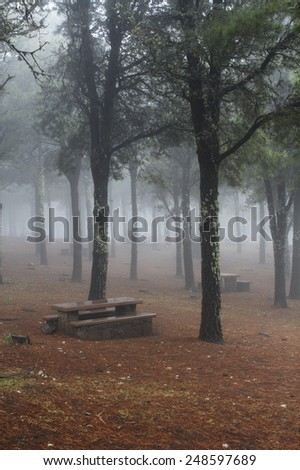Misty woodland with park benches under the trees for a mysterious dreamy background - stock photo