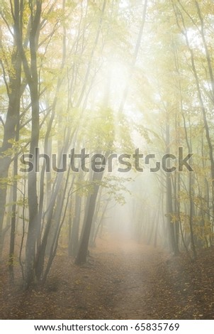 misty yellow autumn forest in a rays of sun