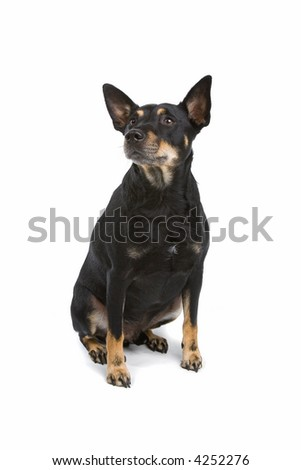 Mix Breed dog sitting down