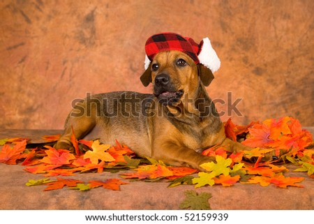 Mix breed puppy wearing cap hat with autumn fall leaves on brown mottled background - stock photo