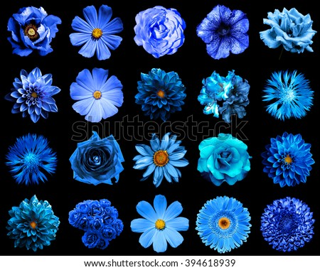 Mix collage of natural and surreal blue flowers 20 in 1: peony, dahlia, primula, aster, daisy, rose, gerbera, clove, chrysanthemum, cornflower, flax, pelargonium isolated on black - stock photo