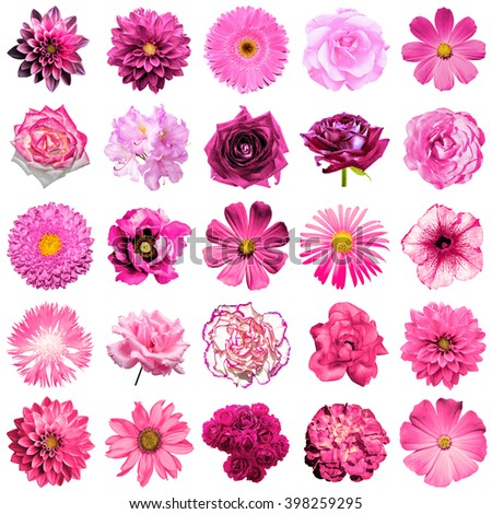 Mix collage of natural and surreal pink flowers 25 in 1: peony, dahlia, primula, aster, daisy, rose, gerbera, clove, chrysanthemum, cornflower, flax, pelargonium isolated on white - stock photo