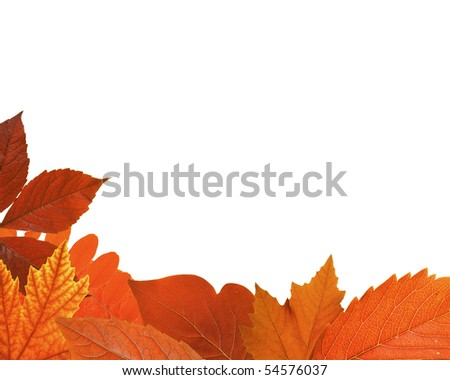 Mixed - Autumn Leaf Frame (XXL) - stock photo