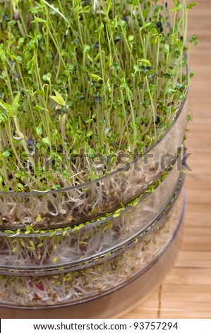 Mixed beansprouts in a container - stock photo