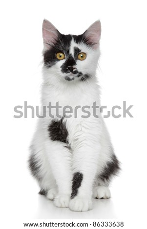 Mixed-breed beautiful black and white cat portrait