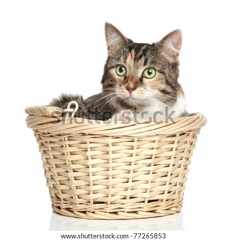 Mixed-breed cat resting in wattled basket on a white background - stock photo