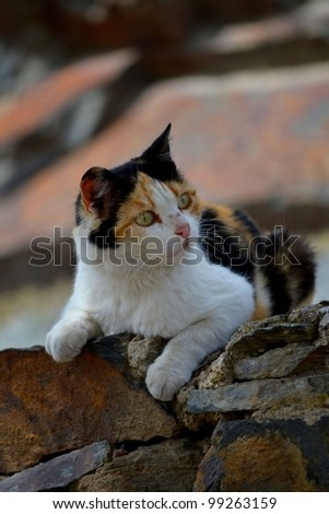 Mixed breed cat resting on stacked stone wall - stock photo
