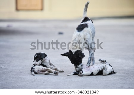 Mixed-breed cute little puppies playing with her dog mom outdoors on street - stock photo