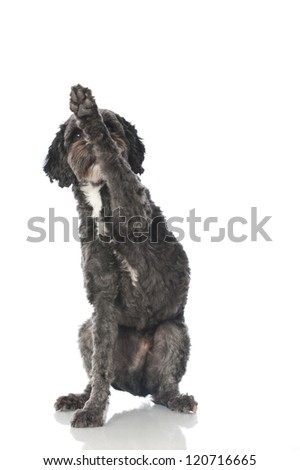 Mixed breed dog - stock photo