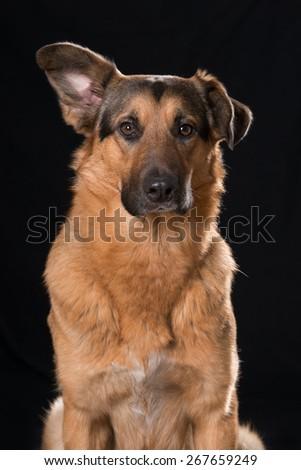 Mixed breed dog - stock photo