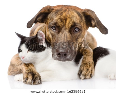 mixed breed dog and cat lying together. isolated on white background - stock photo