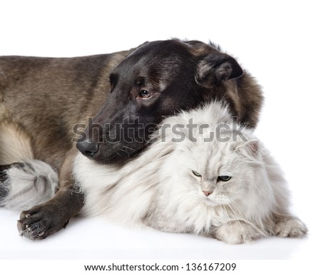 mixed breed dog and persian cat together. isolated on white background - stock photo