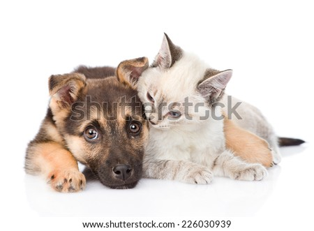 mixed breed dog embracing small cat. isolated on white background - stock photo