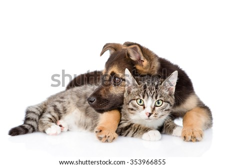Mixed breed dog embracing tabby cat. isolated on white background - stock photo