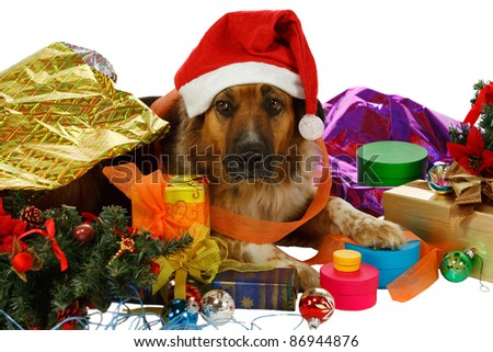 Mixed breed dog has done preparations for christmas - stock photo