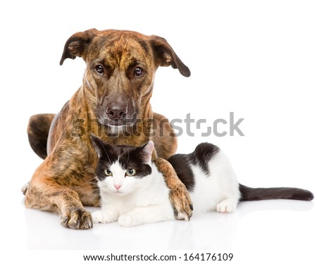 mixed breed dog hugging a cat. isolated on white background - stock photo