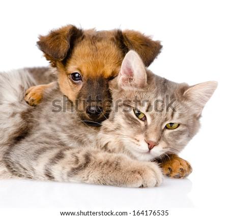 mixed breed dog hugging cat. isolated on white background - stock photo