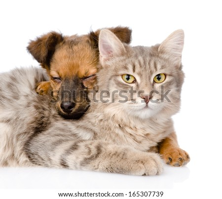 mixed breed dog hugging cat. isolated on white background