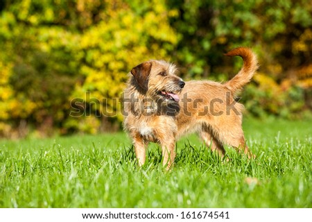 Mixed breed dog in nature