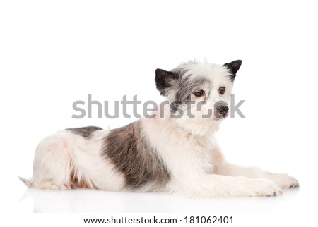mixed breed dog in profile. isolated on white background - stock photo