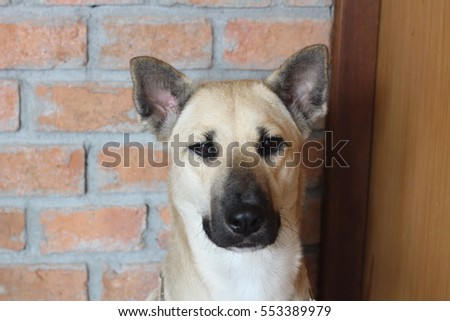 mixed breed dog is alone