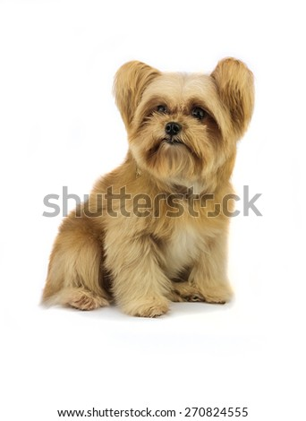 mixed breed dog isolated in white background with clipping path - stock photo