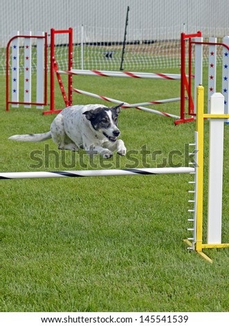 Mixed Breed Dog Jumping Over Agility Fence Bar - stock photo