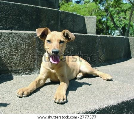 Mixed breed dog laying down - stock photo